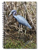 Blue Heron Lacassine Spiral Notebook