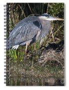 Blue Heron On The Hunt Spiral Notebook