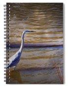Blue Heron - Shallow Water Spiral Notebook