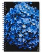 Blue Hydrangea 1 Spiral Notebook