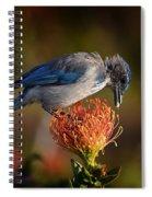Blue Jay 1 Spiral Notebook