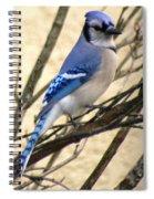 Blue Jay In A Bush Spiral Notebook