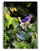 Blue Jay In A Tree Spiral Notebook