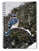 Blue Jay In Snow Storm Spiral Notebook