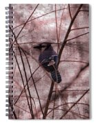 Blue Jay In The Willow Spiral Notebook