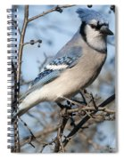 Blue Jay.. Spiral Notebook