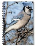 Blue Jay.. Spiral Notebook