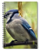 Blue Jay On A Misty Spring Day - Square Format Spiral Notebook