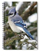 Blue Jay On Hemlock Spiral Notebook