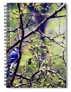 Blue Jay - Paint Effect Spiral Notebook
