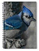 Blue Jay Painterly Spiral Notebook