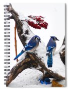 Blue Jays In Winter Spiral Notebook