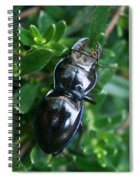 Blue Lined Beetle Spiral Notebook