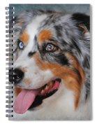 Blue Merle Australian Shepherd Spiral Notebook