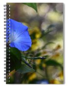 Blue Morning Glories Spiral Notebook