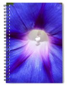Blue Morning Glory Spiral Notebook