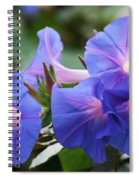 Blue Morning Glory Wildflowers - Convolvulaceae Spiral Notebook