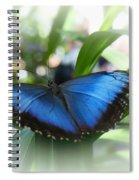 Blue Morpho Butterfly Dsc00575 Spiral Notebook