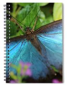 Blue Morpho Spiral Notebook