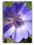 Blue Poppy Anemone Spiral Notebook