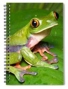 Blue-sided Tree Frog Spiral Notebook