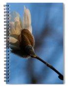 Blue Sky Magnolia Blossom - Dreaming Of Spring Spiral Notebook