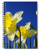 Blue Sky Spring Bright Daffodils Flowers Spiral Notebook