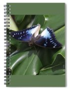 Blue-spotted Charaxes Butterfly #2 Spiral Notebook
