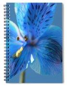 Blue Summer Spiral Notebook