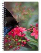 Blue Swallowtail Butterfly  Spiral Notebook