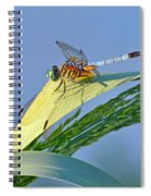 Blue Tail Dragonfly On Navarre Beach Spiral Notebook