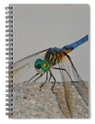 Blue Tail Dragonfly On Navarre Beach2 Spiral Notebook