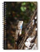 Blue Throated Lizard 4 Spiral Notebook