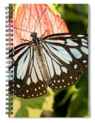 Blue Tiger Butterfly Spiral Notebook