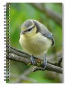 Blue Tit In A Cherry Tree Spiral Notebook