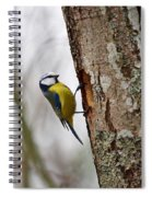 Blue Tit Searching Home Spiral Notebook