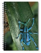 Blue Tropical Weevil Spiral Notebook