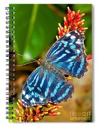 Blue Wave Butterfly Spiral Notebook