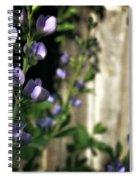 Blue Wild Indigo - Baptisia Australis Spiral Notebook