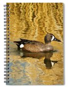 Blue Winged Teal 2 Spiral Notebook