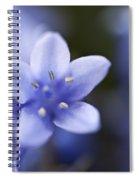 Bluebells 4 Spiral Notebook
