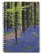 Bluebells In Beech Forest Spiral Notebook