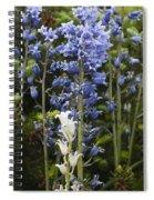 Bluebells 8 Spiral Notebook