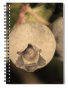 Blueberries On Bush Sepia Tone Spiral Notebook
