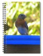 Bluebird Frisbee Spiral Notebook