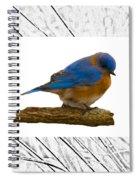 Bluebird In Prairie Frame Spiral Notebook