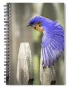 Bluebird On The Fence Spiral Notebook