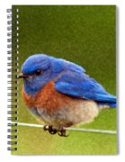 Bluebird  Painting Spiral Notebook