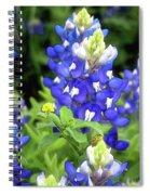Bluebonnets Blooming Spiral Notebook