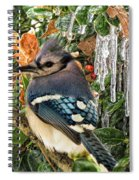 Bluejay And Ice Spiral Notebook